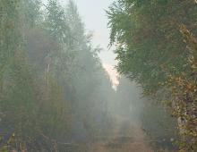 """Наблюдения за состоянием загрязнения атмосферного воздухав окрестности г. Улан-Удэ (местность  """"Верхняя Березовка"""")"""
