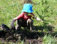 17 мая Всероссийский День посадки леса
