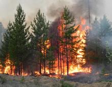 21 апреля высокая пожарная опасность - 4 класс в Кяхтинском, Закаменском, Иволгинском, Тарбагатайском, Селенгинском, Мухоршибирском, Бичурском районах и окрестностях г.Улан-Удэ.
